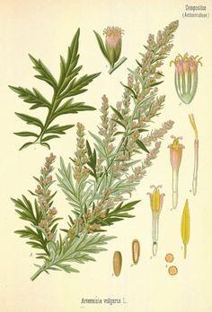 botaniske referencer ses i mange afskygninger
