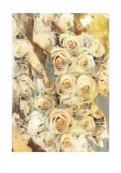rose / roses tecnica mista