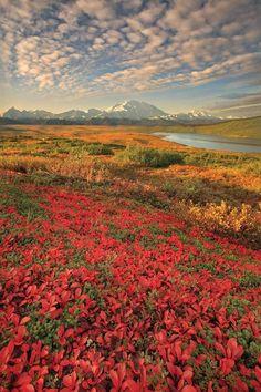 Denali Nation Park, Alaska