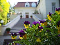 Instawalk Residenz des Deutschen Botschafters 05/20 - photo by @daheimistlangweilig Plants, Deutsch, Plant, Planets
