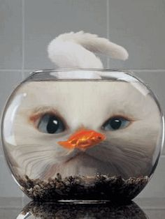 Cat and the Fish bowl