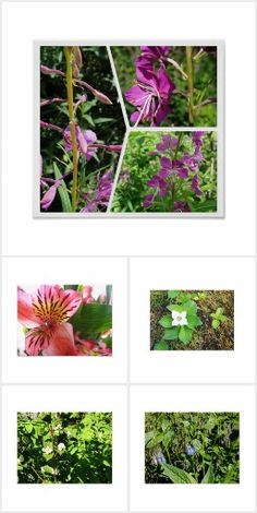 Floral and Botanical collection from Zazzle designer Calethia Baker.