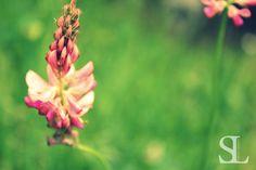 Sommergefühle - Blüte in Nahaufnahme