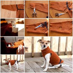 Babbles By Brookshared her story and DIY project of making this sweater sleeve dog coat.Over the years, she has made quite a few dog sweaters out of sweatshirts and felted sweaters. It all started on a camping trip when the weather turned cold and her poor dog Chloe was shivering …