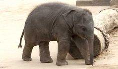 Elefant an Kette - Lebensweisheit zu Selbstvertrauen