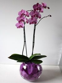 Google Image Result for http://www.diyweddingexpert.com/wp-content/uploads/2011/03/orchid-plant-centerpiece.jpg