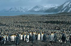 penguins, penguins everywhere...