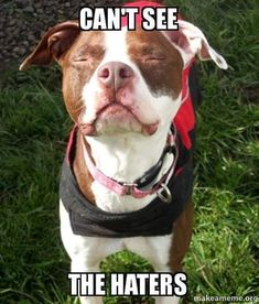 Pitbulls are luv-a-bull and ador-a-bull