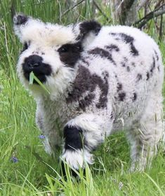 Baby Farm Animals, Baby Cows, Baby Animals Pictures, Cute Animal Pictures, Animals And Pets, Pretty Animals, Super Cute Animals, Cute Little Animals, Cute Funny Animals