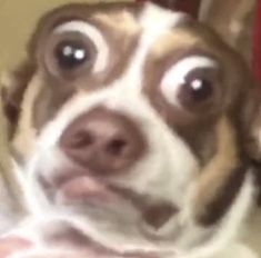 Mfw people say you have a clean setup Funny Animal Jokes, Funny Dog Memes, Cute Memes, Funny Animal Pictures, Cute Funny Animals, Stupid Funny Memes, Animal Memes, Cute Baby Animals, Funny Cute