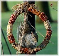 Bird Feeder wreath made of Indian corn. Okay, SQUIRREL and bird feeder wreath! :-) Great little project for fall. Might make a nice homemade gift as well. Indian Corn Wreath, Tier Fotos, Fall Halloween, Bird Feeders, Squirrel Feeder Diy, Bird Houses, The Great Outdoors, Garden Art, Outdoor Gardens