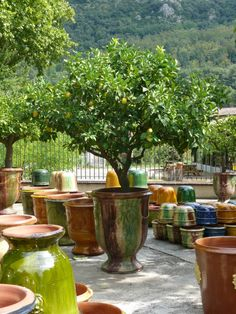 Wunderful lemon trees which I found in Anduze in southern France