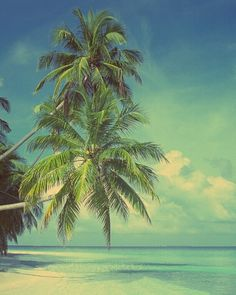 Beaches and palm trees. May your summer be full of them.