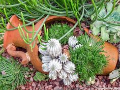 10 Ideas Of What To Do With Broken Plant Pots. You'll get some inspirations for planting too.