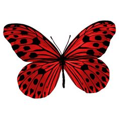 Designer Clothes, Shoes & Bags for Women Butterfly Clip Art, Butterfly Drawing, Butterfly Pictures, Red Butterfly, Butterfly Painting, Butterfly Wallpaper, Art Papillon, Insect Art, Beautiful Butterflies