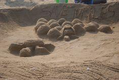 Save the #Turtle Sand Sculpting Contest 2018 at #Palavakkam #Beach  http://chennaieventemcees.com/save-turtle-sand-sculpting-contest-palavakkam-beach-coverage-chennai-event-entertainers/  #cee #ceent #chennaieventemcees #chennaievententertainers #chennaieventprofessionals #mcnandhini #mcthamizh #sandsculpting #contest #savetheturtle #ezoneIndia #urbantree #jeppiar #college #ridleyrun