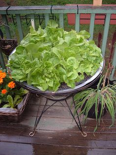 Another solution to a raised garden!  Love it. Lettuce Bowl