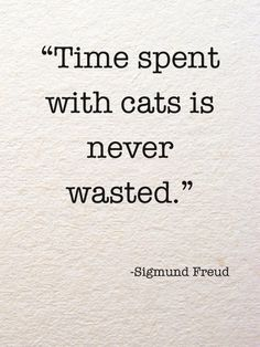 """Time spent with cats is never wasted."" Sigmund Freud"