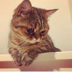 なっきぃママ°C-uteのみんなとのたのしー時間楽しんでにゃ〜😸 #c_ute #中島早貴 #なっきぃ  #るなっきぃ #ルナ #luna #ミヌエット #マンチカン #ペルシャ #るなっきぃ #今日のルナ #ナカジマカメラ #中カメ  #ハロプロメンバー猫 #ハロメン猫  #ねこ #愛猫  #なっきぃルナちゃんの写真ありがとう  #雑画像じゃなくてルナちゃんちゃんと写っててうれしい #ルナちゃんの誕生日4月上旬説 #今日もなっきぃが幸せでありますように #goodmorning  #haveaniceday  #cat #kitten #nacky #sakinakajima