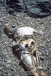 Another grim shot of Mallory's body near the Everest summit. Mount Everest Deaths, Bog Body, Monte Everest, Sacred Mountain, Mysterious Places, Ice Climbing, Amazing Adventures, Mountaineering, Climbers