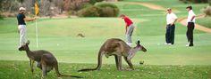 #Golf In #Australia | Golf #discounts | Golf #bookings | Golf #tee #time discounts | Discounted tee times  http://livintotal.com/golf-australia/