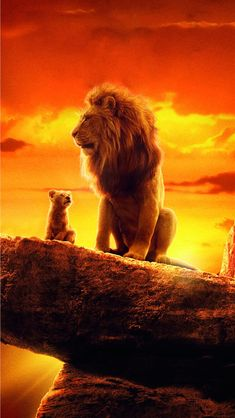 Simba and mufasa 🌜🌛 Lion King Movie, Lion King Art, Lion Art, Disney Lion King, Lion Wallpaper Iphone, Wildlife Wallpaper, Lion King Pictures, Lion Images, Lion King Animals