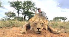 """""""O Grito do Bicho"""": Quanto custa a vida de um leão...."""