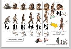 Darwin's Theory Of Evolution, Human Evolution, Dna Art, Art History Memes, Organic Molecules, Biology Classroom, Primitive Survival, Prehistoric World, History Teachers