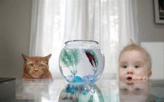 Which is more adorable - photos of kids or photos of pets? You don't have to decide with this cute photostream of both kids and pets together! Funny Babies, Cute Babies, Funny Photos, Cute Pictures, Amazing Pictures, Funny Images, Funny Animals, Cute Animals, Cute Kids Photography