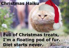 A Christmas cat haiku.