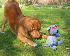 """Studies show dogs like new toys more than old... here's how to make them """"new"""" again!"""