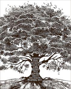 Dave Matthews Band Dreaming Tree