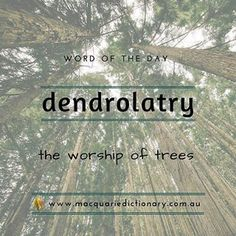 Our #wordoftheday is dendrolatry. Sign up to get these daily at our site (link in our bio). . . #words #dictionary #wotw #macquariedictionary #english #language #vocabulary #learning #writing #wordnerd #funfact #didyouknow #aussie #urban #rural #etymology #oz #wotd #wordoftheday #macqwotd #crossword #scrabble #trivia #trees #love Unusual Words, Weird Words, Rare Words, Unique Words, New Words, Beautiful Words, Cool Words, Dictionary Words, Unspoken Words