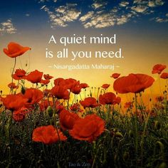 """""""A quiet mind is all you need."""" ☮"""