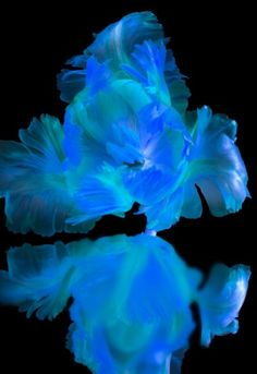 Wall Art Photography Prints available at www.remingtongalleries.com    This blue reflective flower captivates the mood perfectly, don't you think?