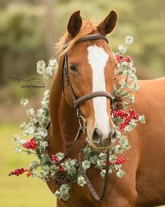 There truly is not an occasion that is NOT improved by wearing something FESTIVE!maybe there are a FEW occasions that could do… Cute Horse Pictures, Horse Photos, All The Pretty Horses, Beautiful Horses, Animals And Pets, Cute Animals, Winter Horse, Faster Horses, Christmas Horses