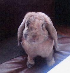 This is Kiera's bunny rabbit, Egypt. Cute!