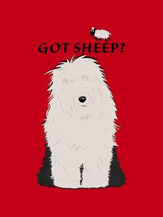 Got sheep? Chien Bobtail, Dog Pictures, Funny Animal Pictures, Dog Barking Video, Cute Funny Animals, Cute Dogs, Sheepadoodle Puppy, Bearded Collie, Old English Sheepdog
