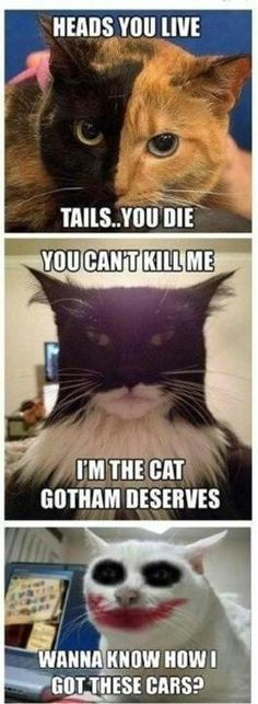 Catman.. Haha funny pun... Not really but funny picture