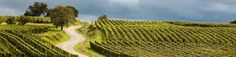 Romans, Html, Vineyard, Photos, Outdoor, Sons, Weddings, Outdoors, Pictures