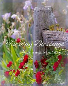 Tuesday Blessings! ❤