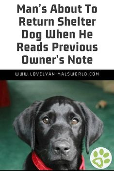Man's About To Return Shelter Dog When He Reads Previous Owner's Note - Lovely Animals World I Love Dogs, Puppy Love, Cute Dogs, Cutest Puppy, Shelter Dogs, Animal Shelter, Rescue Dogs, Pretty Animals, Cute Animals