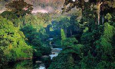 Shinrin yoku, o baño de bosque (950×572) http://www.beck-shop.de/fachbuch/leseprobe/9783899448504%20LP.pdf