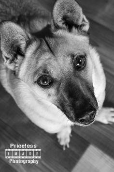 #petphotography #renopetphotgraphers #renonv #pip #dogs