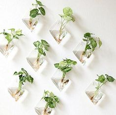 Mkono 2 Pack Wall Hanging Plant Terrarium Glass Planter, Diamond Fill with small plants, or other decorative objects and use as an eye-catching decorative accent for any space. Ideal for home, offi… Hanging Glass Planters, Hanging Air Plants, Hanging Gardens, Hanging Plant Wall, Hanging Terrarium, Diy Hanging, Hanging Baskets, Indoor Plant Wall, Indoor Plants