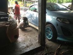 starting Mazda 2 Modify Mazda 2