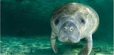 Manatee, Dolphin and Birding Nature Kayak Tours, Ft Myers, Florida