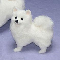 134 Best American Eskimo Dog Is A
