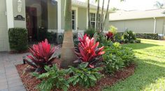 "florida front yard landscapes - Google Search ...""hot"" colored red plants and ""cool"" green ferns make this an eye catching scape..."