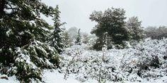 Προστασία φυτών από κρύο, χιόνι, παγετό (+video)   Τα Μυστικά του Κήπου Snow, Garden, Outdoor, Outdoors, Garten, Lawn And Garden, Gardens, Outdoor Games, Gardening